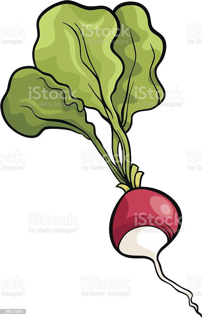 radish vegetable cartoon illustration royalty-free stock vector art