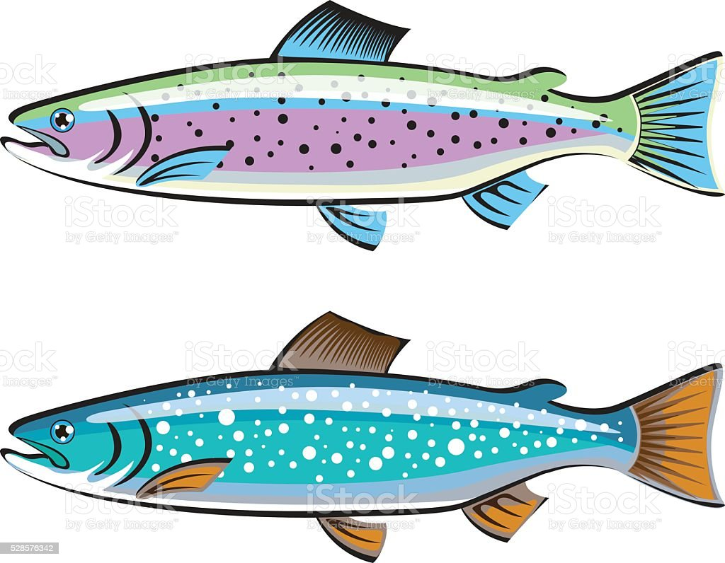 Rainbow and Lake trout fish vector art illustration
