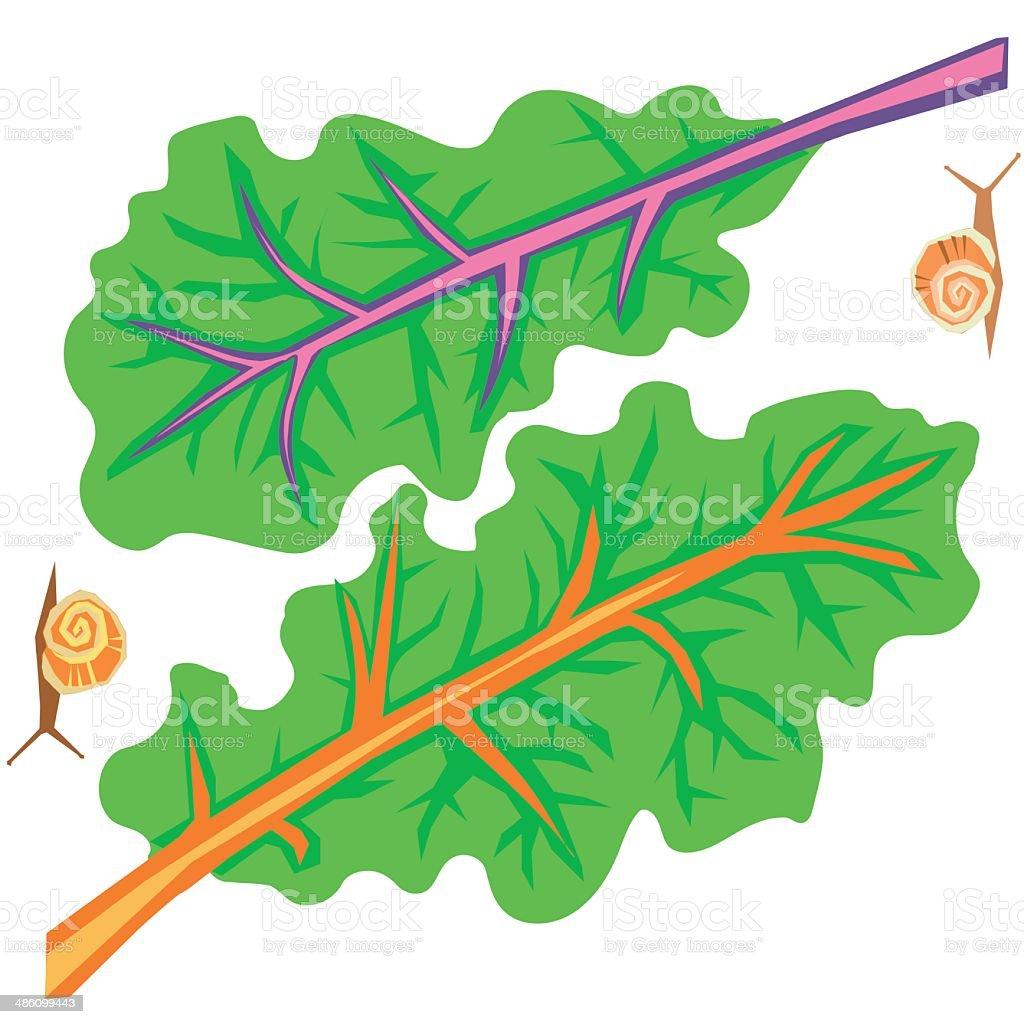 Rainbow Chard vector art illustration
