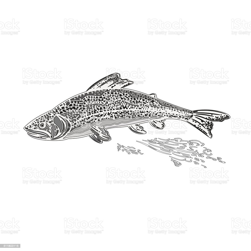 Rainbow trout as vintage engraved vector vector art illustration