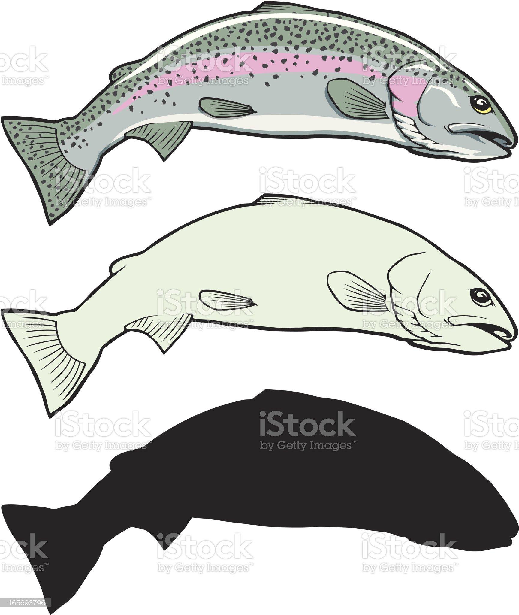 Rainbow Trout Illustration Set royalty-free stock vector art