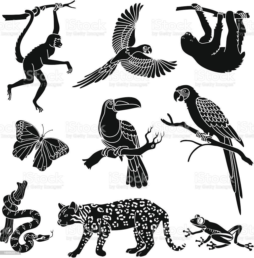 rainforest animals vector art illustration