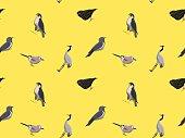Random European Birds Wallpaper 2