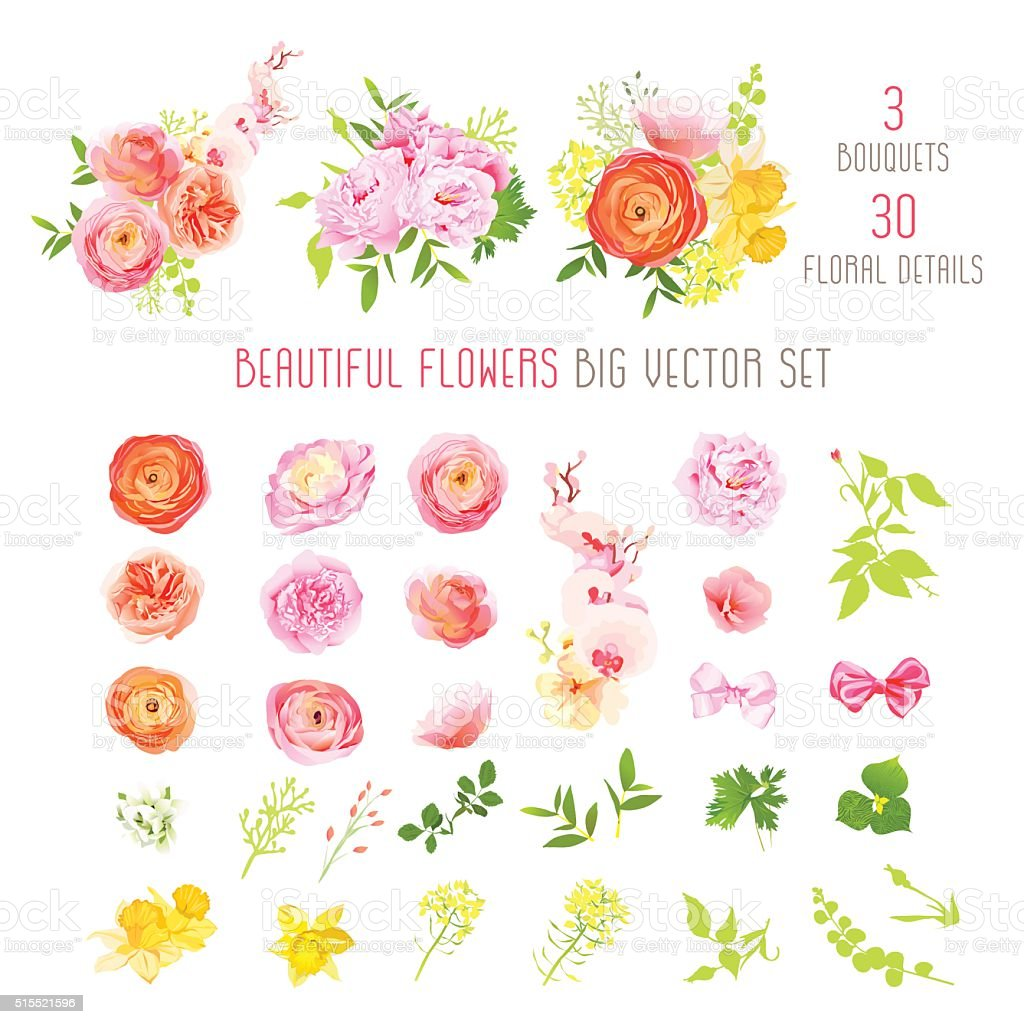 Ranunculus, rose, peony, narcissus, orchid flower big vector collection vector art illustration