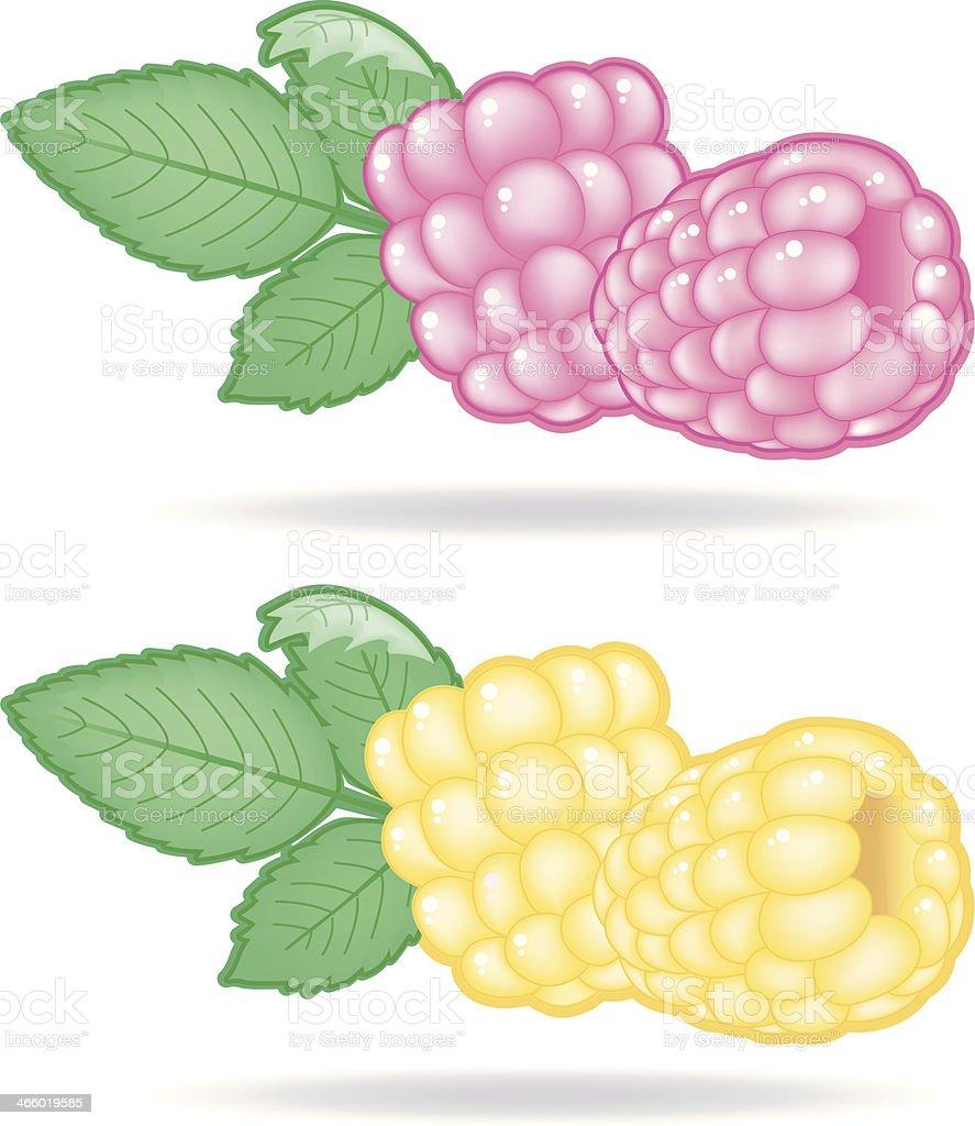Raspberries (2 Varios with Leaf). vector art illustration