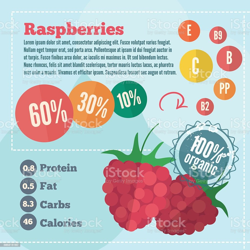 Raspberry infographics in flat style vector art illustration