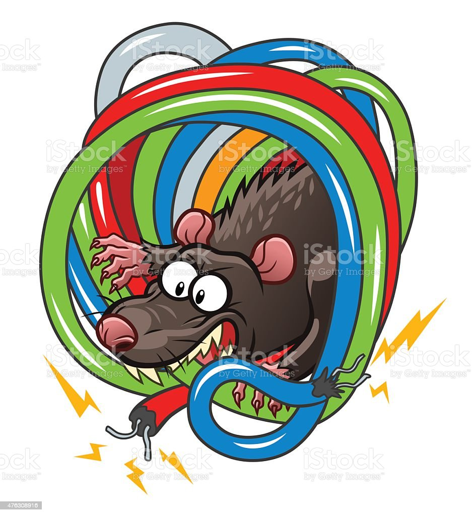 Rat gnawing wires vector art illustration