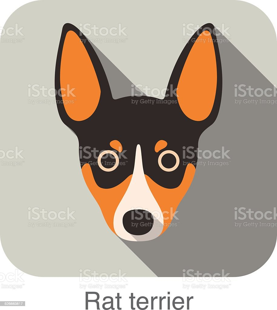 Rat terrier dog face flat icon, dog series vector art illustration