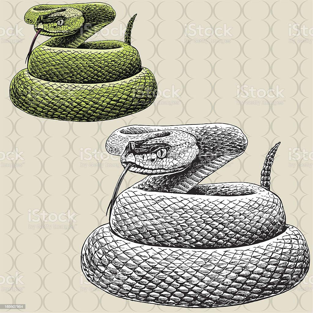 Rattlesnake Hissing - Snake vector art illustration