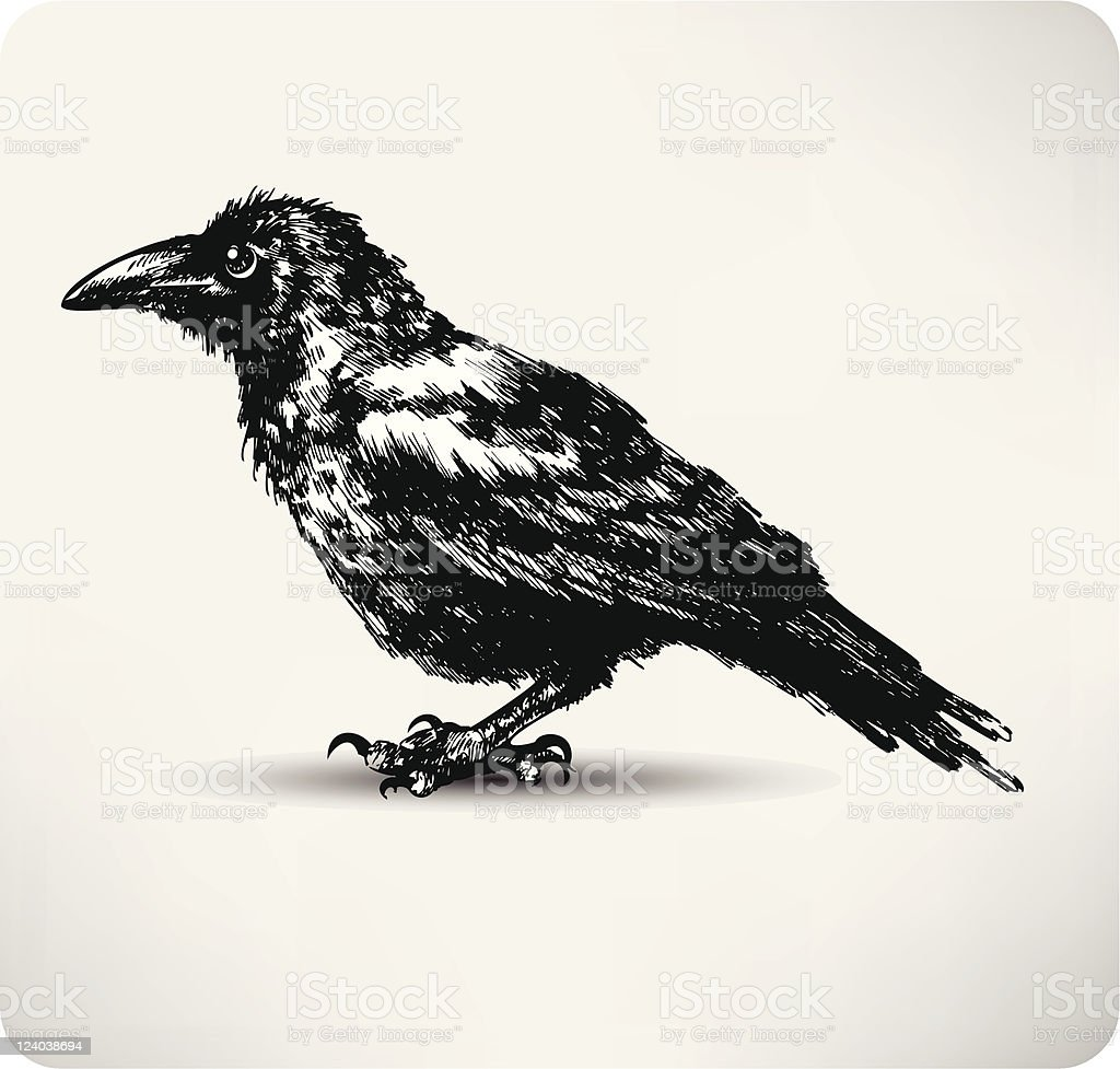 Raven Hand drawn high quality vector royalty-free stock vector art