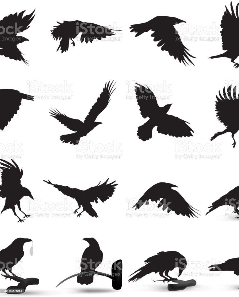 Raven Silhouette vector art illustration