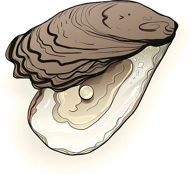 Oyster Clip Art, Vector Images & Illustrations - iStock