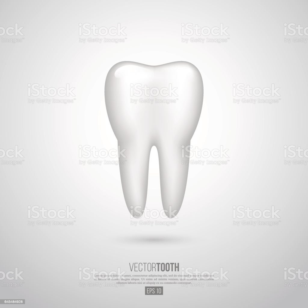 Realistic 3D tooth. vector art illustration