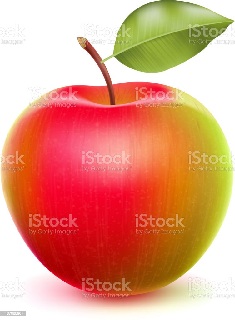 Realistic apple with green and red sides. vector art illustration