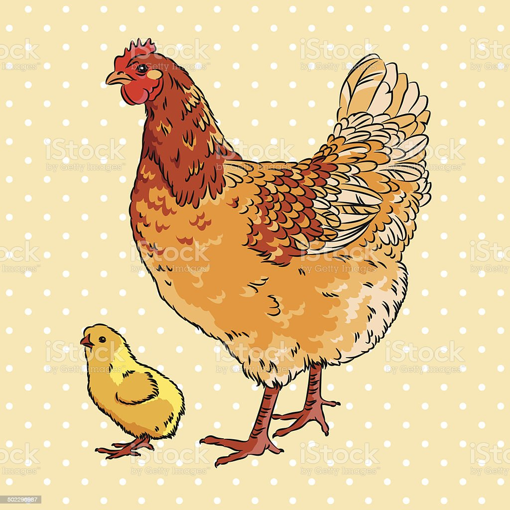 Realistic broody chicken and baby chick side view vector art illustration