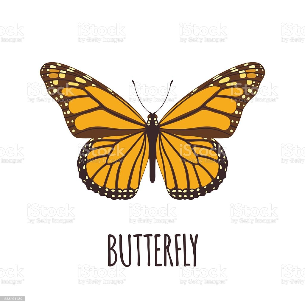 Realistic butterfly in flat style. vector art illustration