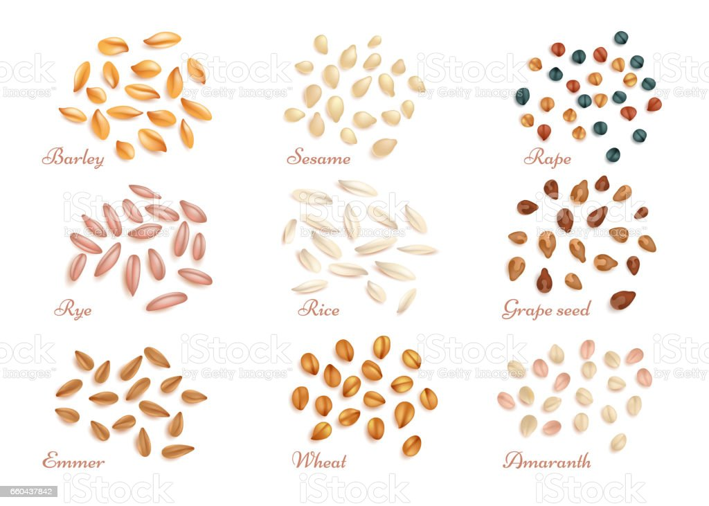 Realistic cereal grains and oil seeds vector set vector art illustration