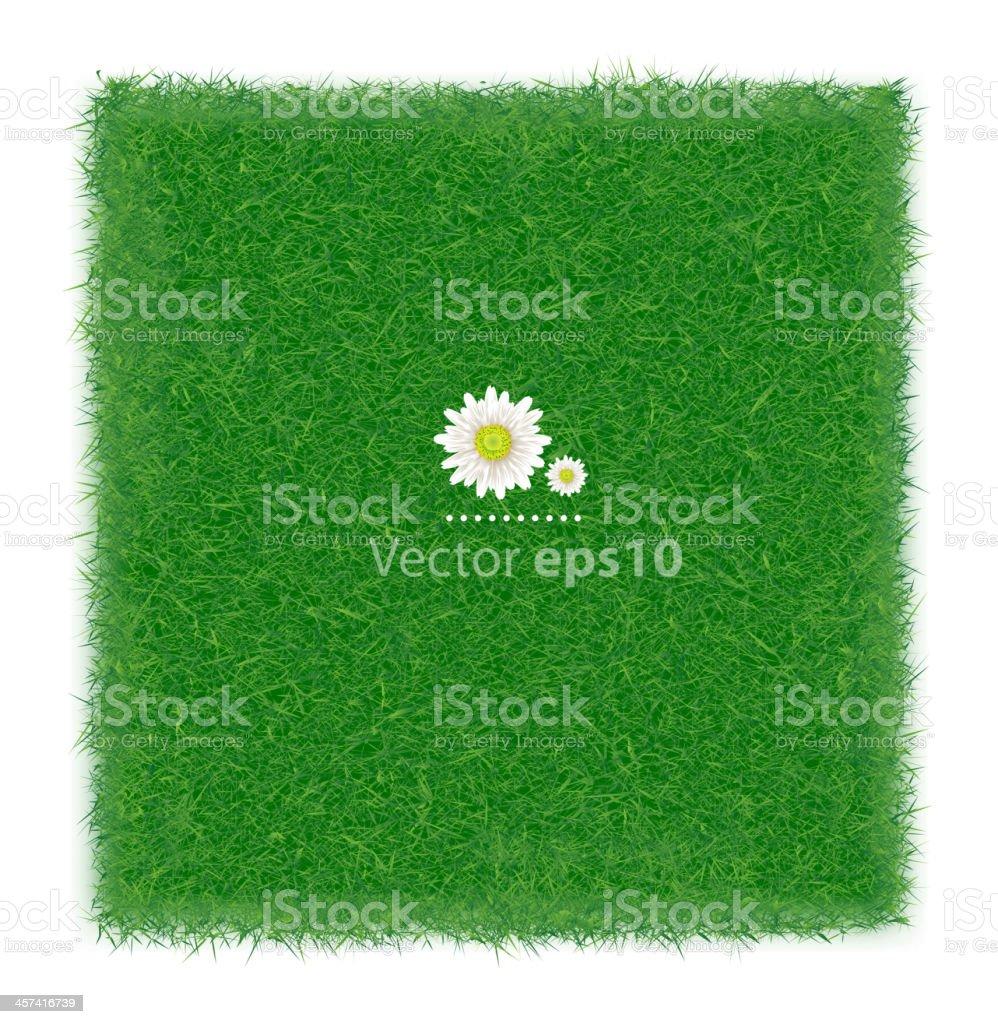Realistic green grass field background, Vector illustration vector art illustration