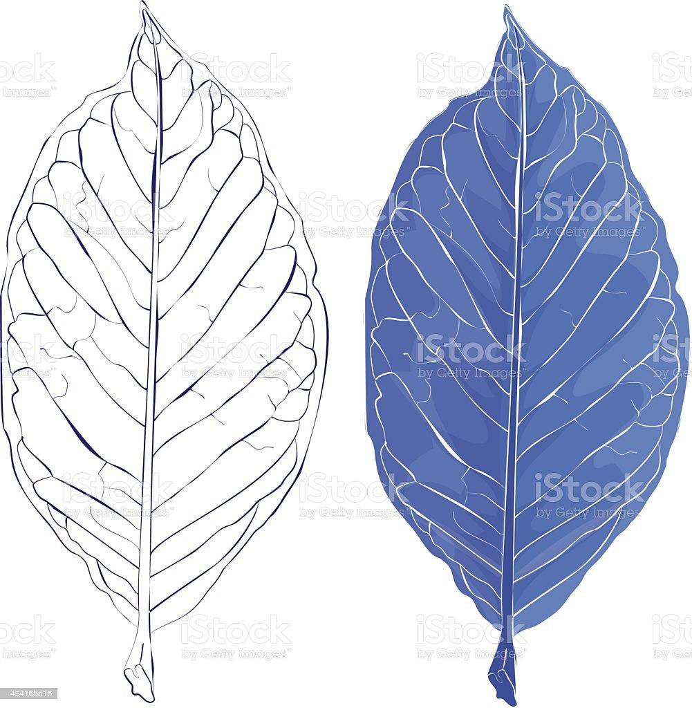 Realistic isolated leaves vector illustration. vector art illustration