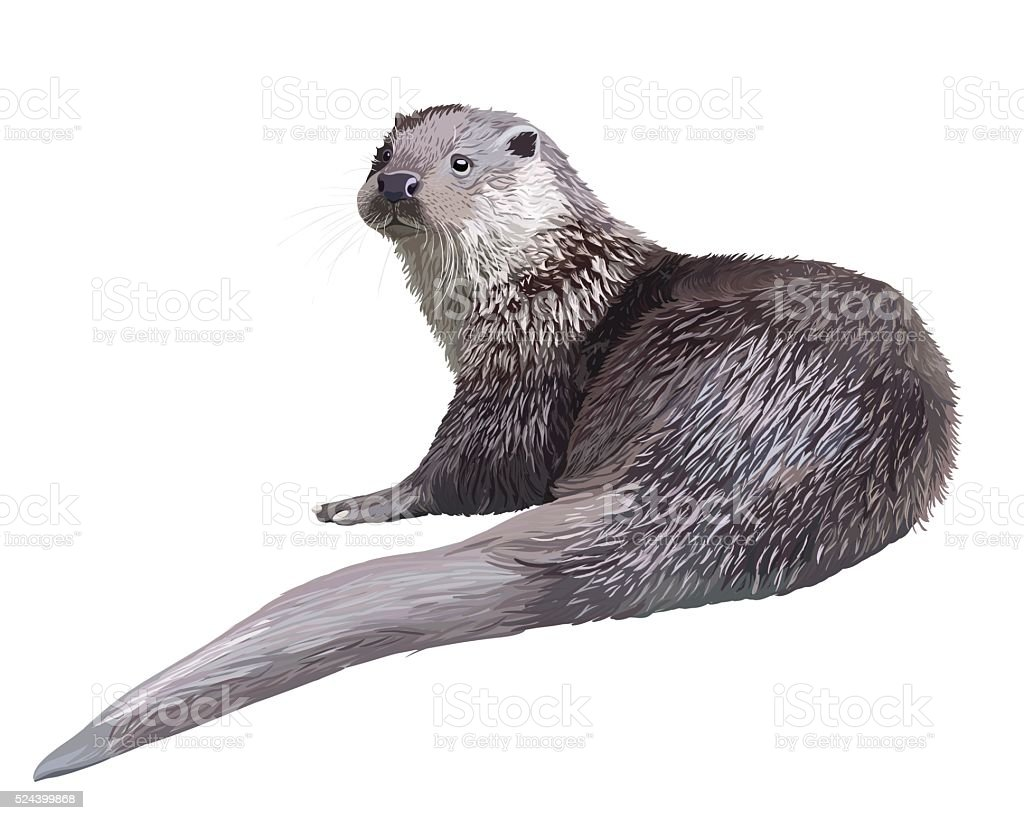 Realistic otter vector art illustration