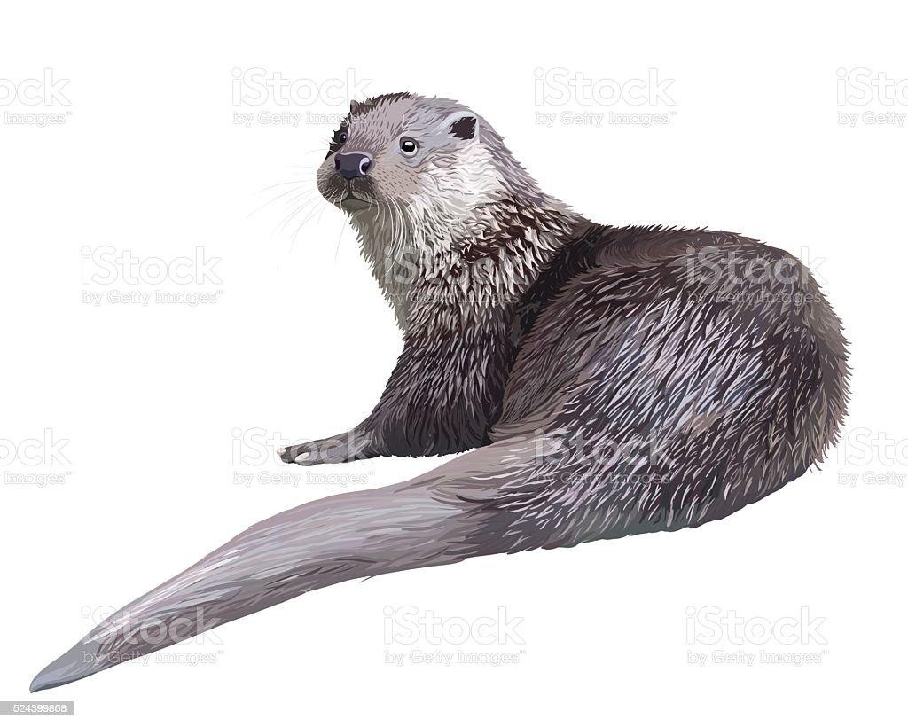 Realistic otter vector art illustration