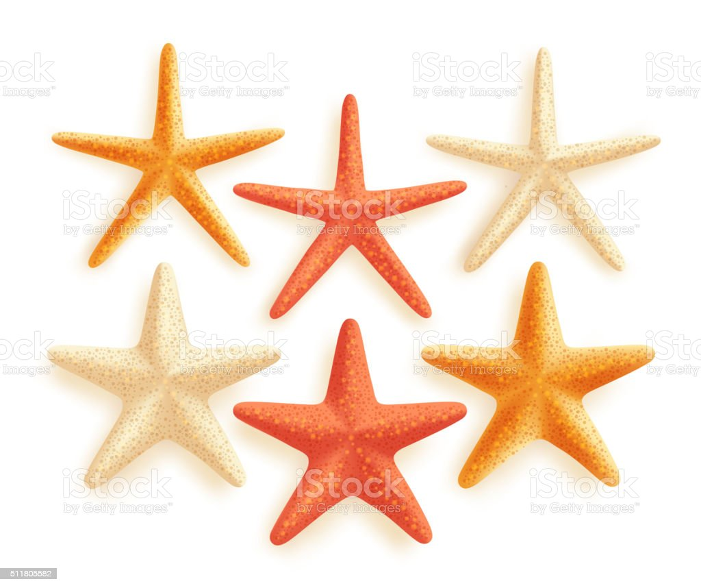 3D Realistic Set of Vector Starfish with Colors for Summer vector art illustration