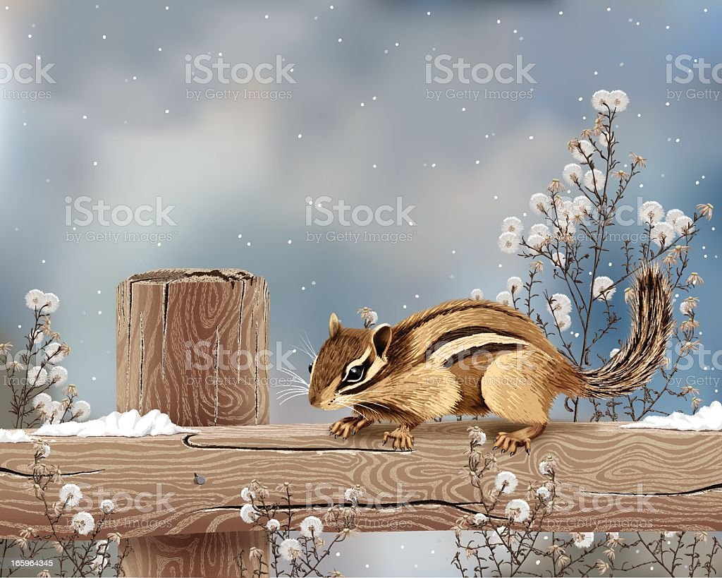 Realistic Vector Illustration of Chipmunk in Winter with Copy Space. vector art illustration