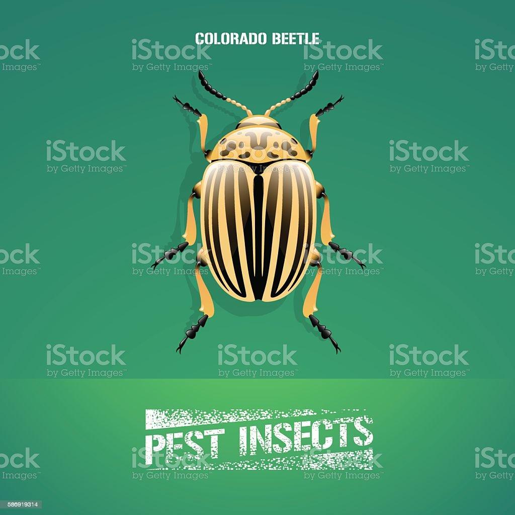 Realistic vector illustration of insect Leptinotarsa decemlineata (colorado beetle) vector art illustration