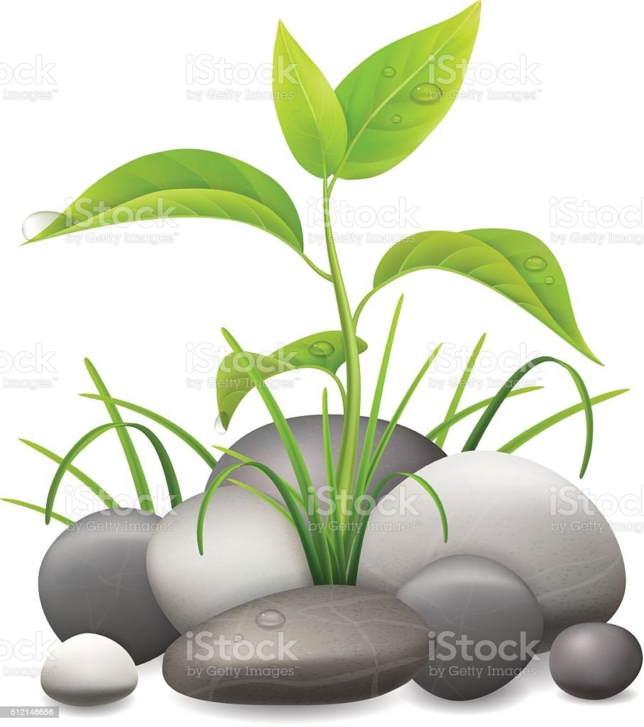 realistic vector sprout grass and pebble vector art illustration