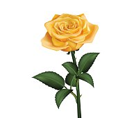 Realistic yellow rose