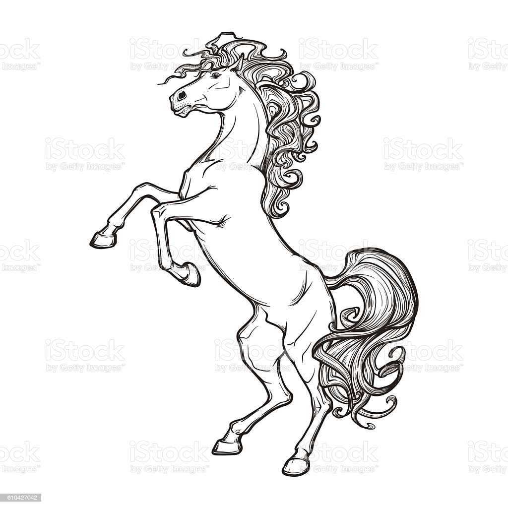 rearing horse black on white BG vector art illustration
