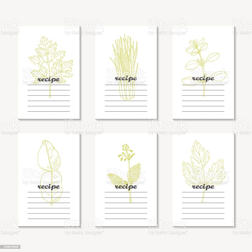 Recipe cards collection with hand drawn spicy herbs. Sketched chervil vector art illustration