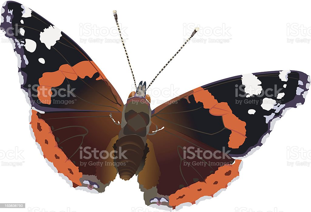red admiral royalty-free stock vector art