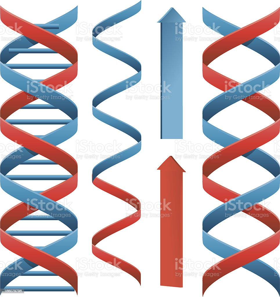 Red and blue helix vector art illustration