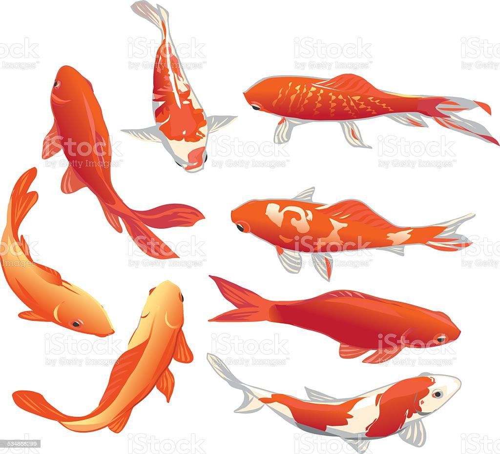 Red and gold koi fishes vector design elements vector art illustration