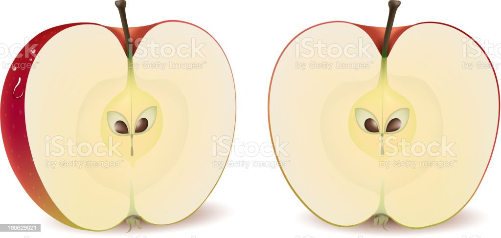 Red apple vector art illustration