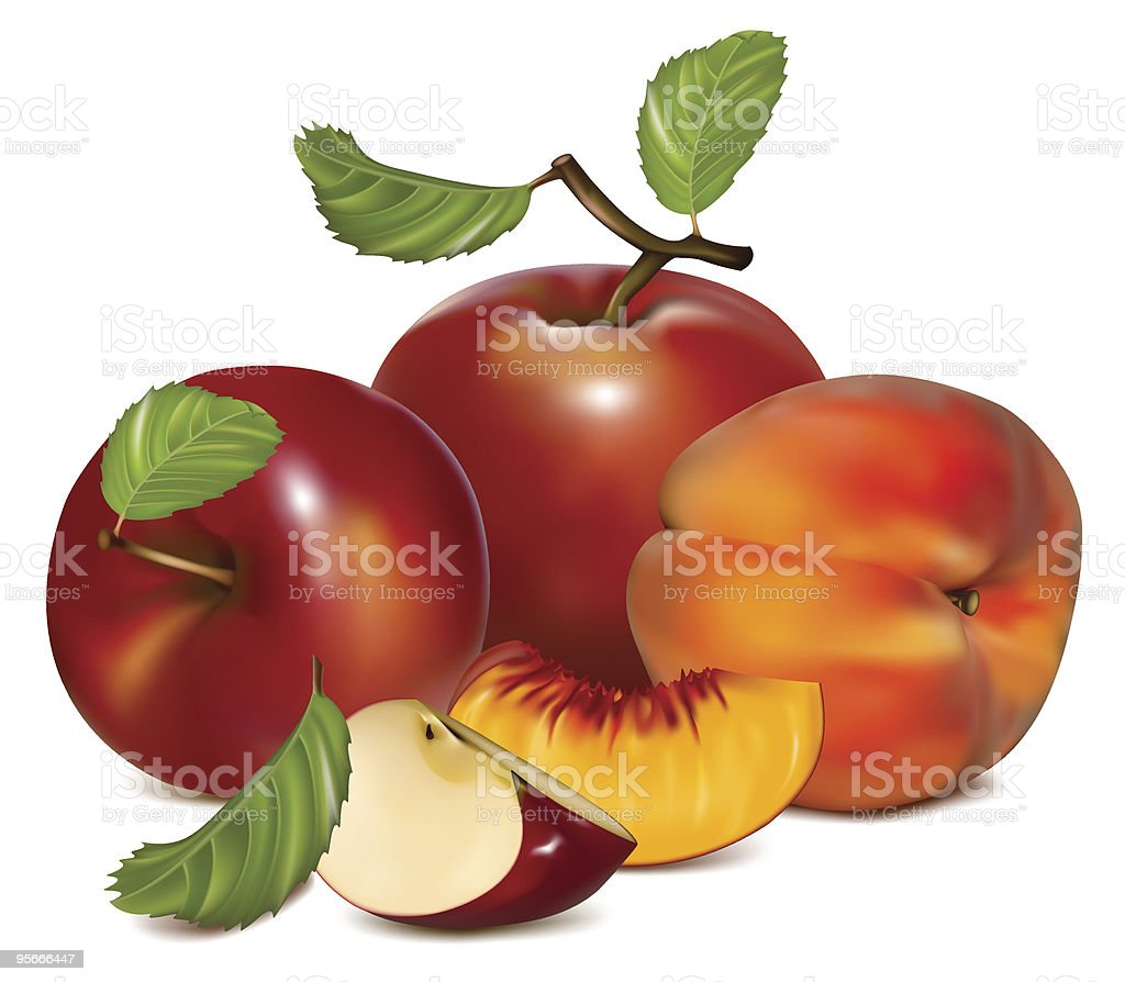 Red apples and ripe peaches. royalty-free stock vector art