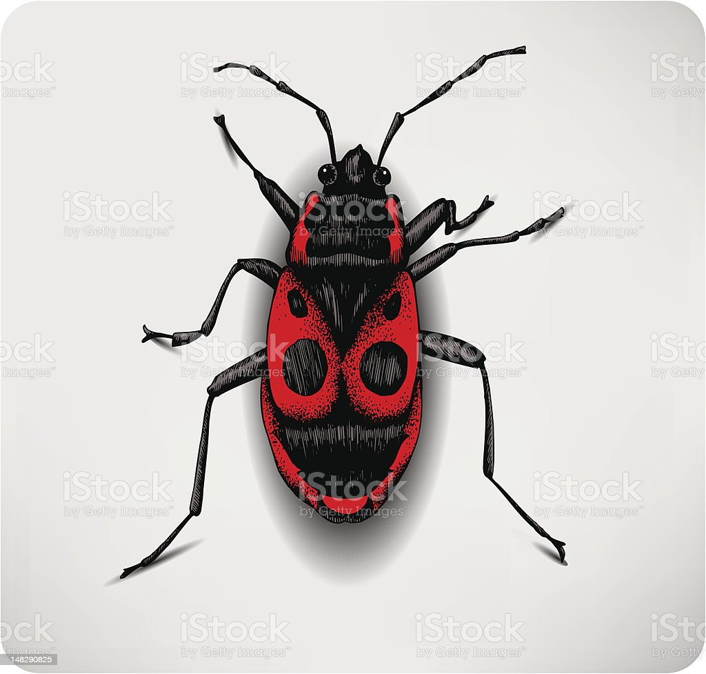 Red beetle, hand-drawing. Vector illustration. royalty-free stock vector art