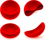 Red blood cells medical illustration