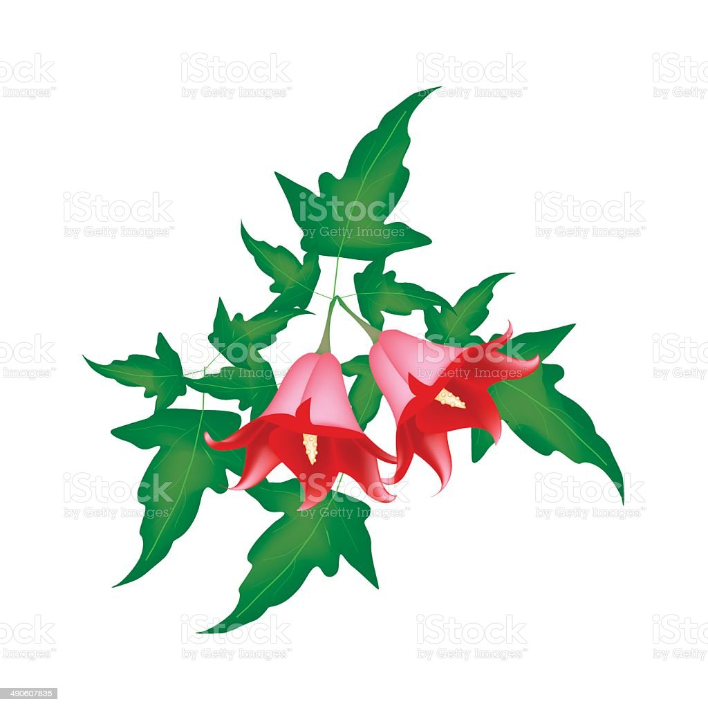 Red Canarina Canariensis Flower on White Background vector art illustration