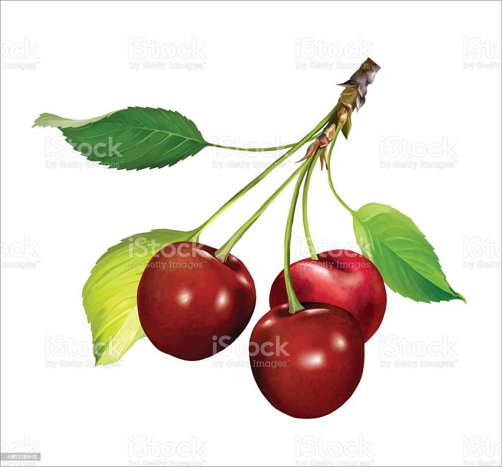 Red Cherries on a Branch. Vector vector art illustration