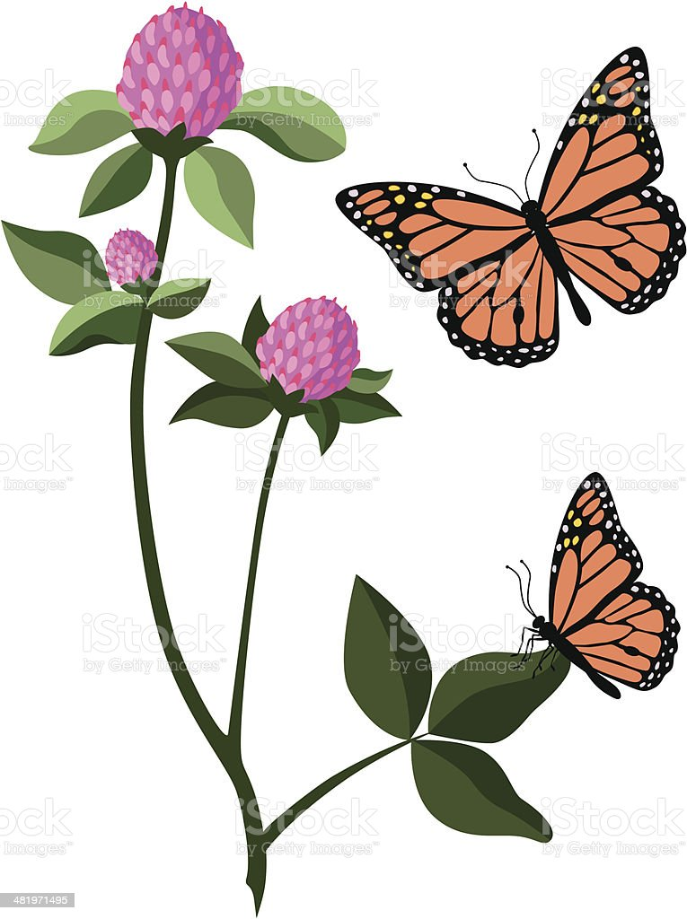 red clover and monarch butterfly royalty-free stock vector art