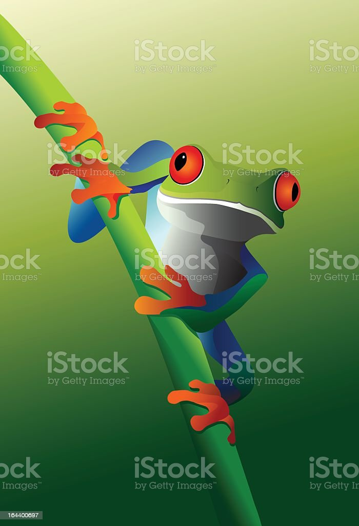 Red eyed tree frog on branches vector art illustration