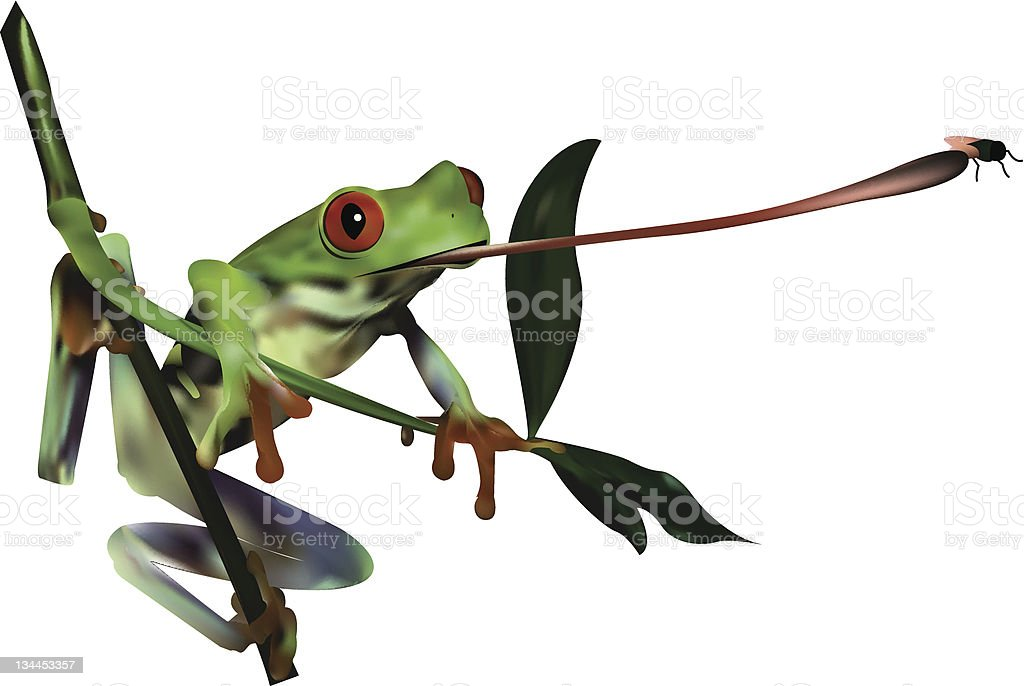 red eyed tree frog vector art illustration