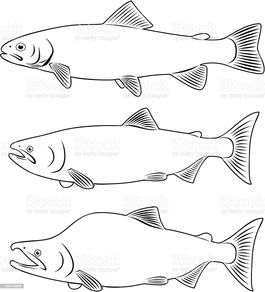 red fish vector art illustration