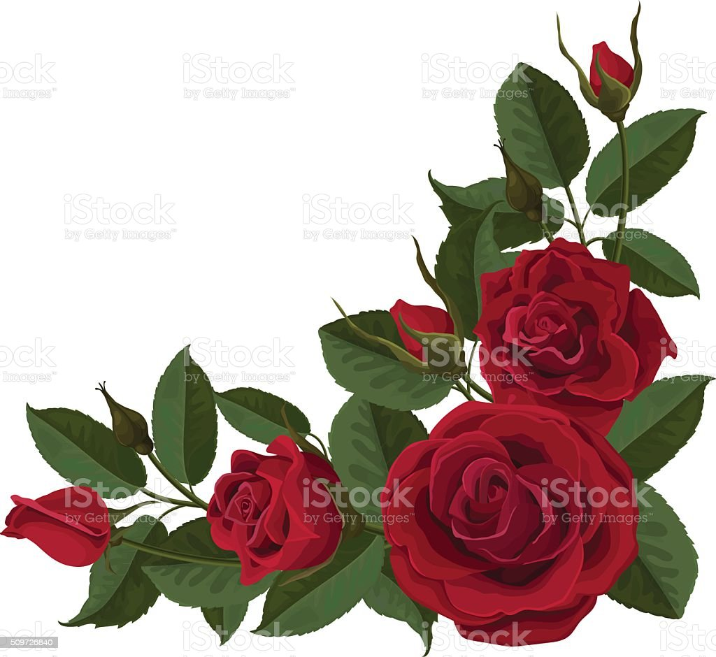 Red flowers roses buds and green leaves vector art illustration