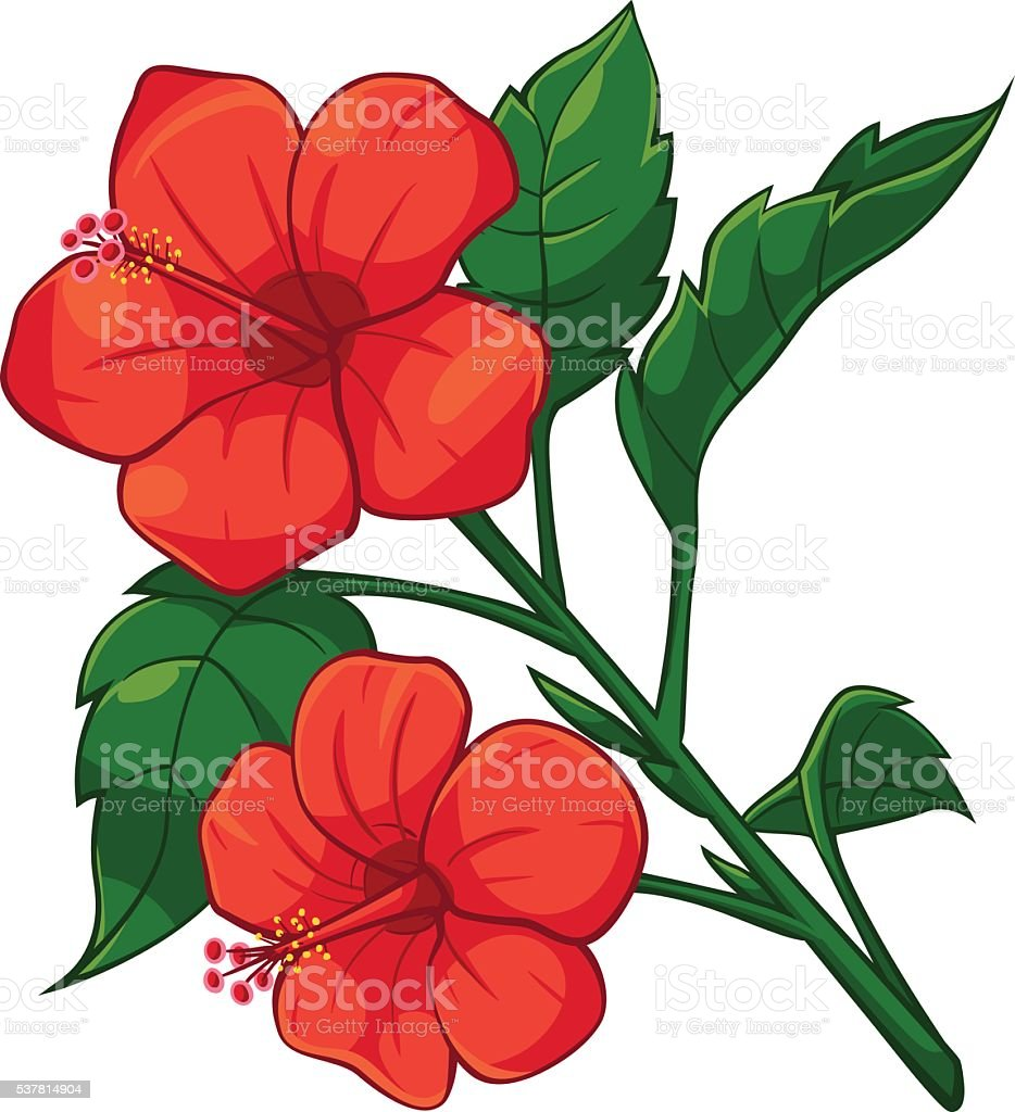 Red Hibiscus royalty-free stock vector art