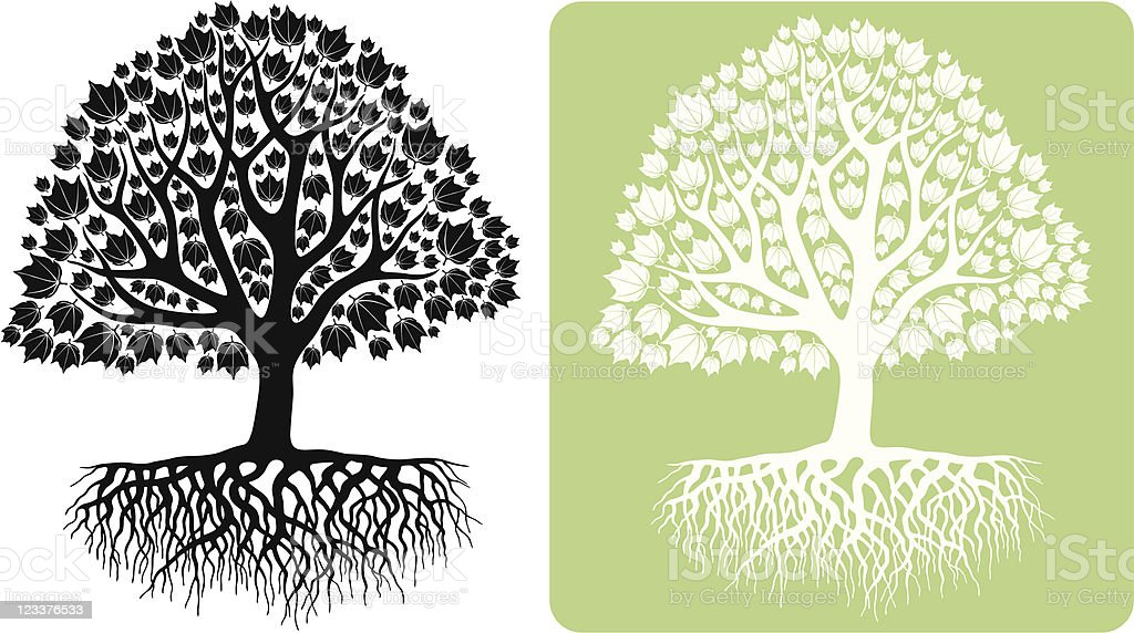 Red Leaf Maple Tree royalty-free stock vector art