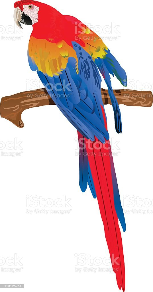 Red Macaw (Vector) vector art illustration