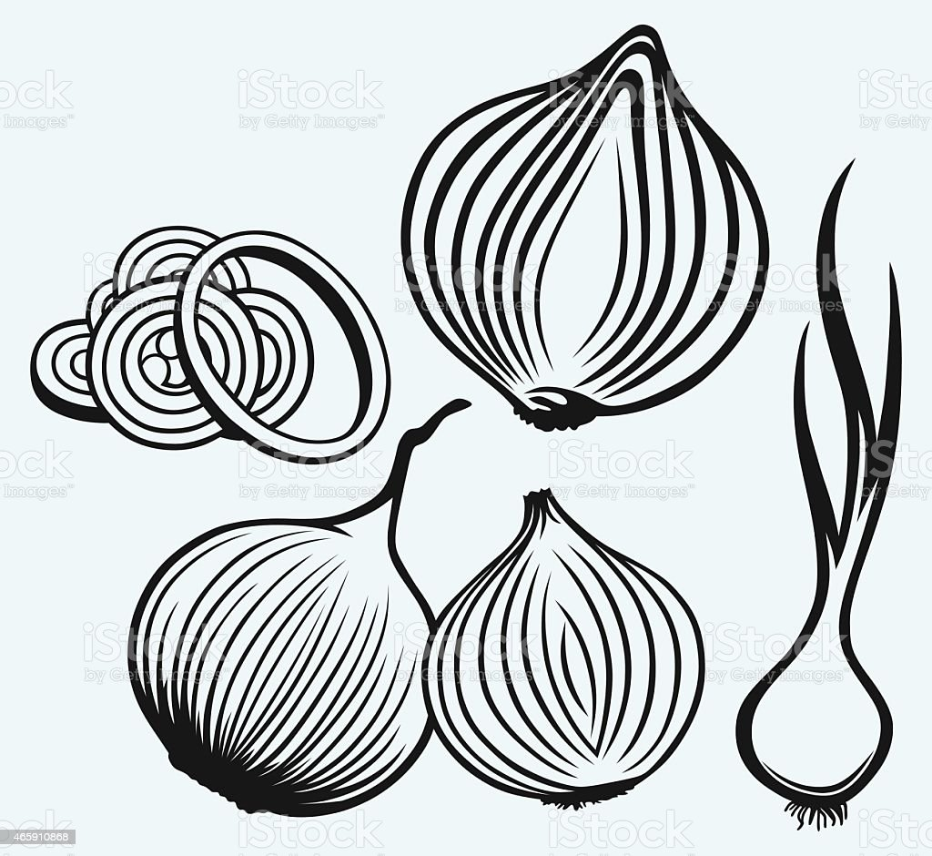 Red onion bulb and rings vector art illustration